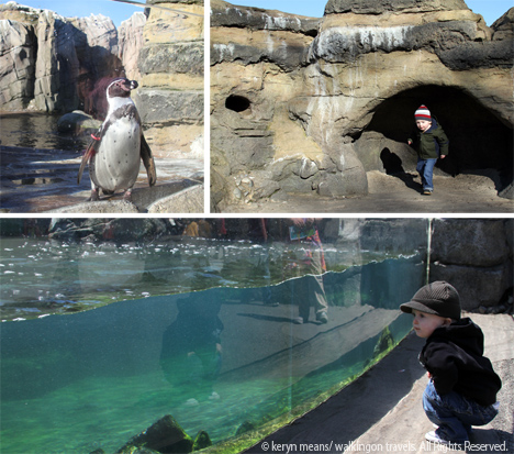 Creature encounters for all ages at the woodland park zoo for What does flipping houses mean
